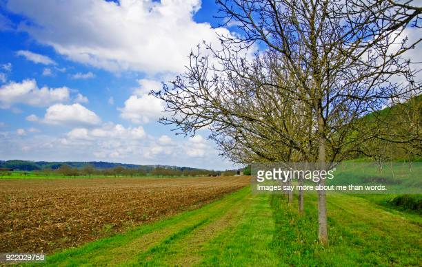 a tree line in a farm in dordogne. - sarlat stock photos and pictures