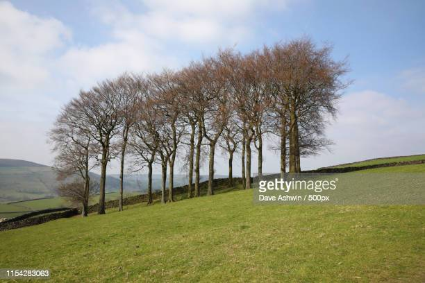 tree line - dave ashwin stock pictures, royalty-free photos & images
