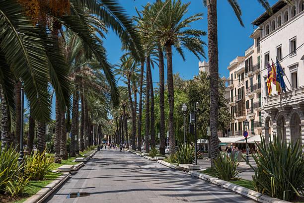 a tree lined boulevard in palma de mallorca, spain - tree lined boulevard stock pictures, royalty-free photos & images