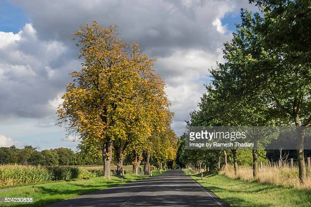 tree lined country road - baum stock pictures, royalty-free photos & images
