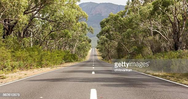 Tree lined empty road, The Grampians, Victoria Australia