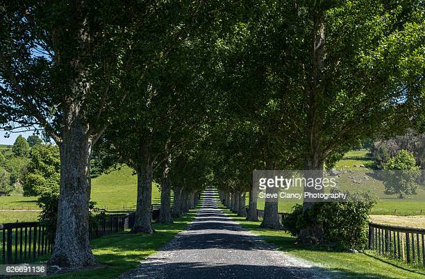 tree lined lane - boulevard stock pictures, royalty-free photos & images