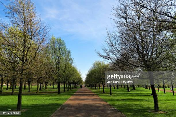 tree lined path in glasgow green in early spring - glasgow green stock pictures, royalty-free photos & images