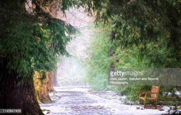 tree lined path in snow and bench framed by green cedar in pennsylvania - pennsylvania stock pictures, royalty-free photos & images