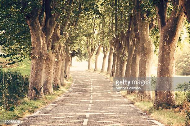 Tree lined paved road with beautiful light