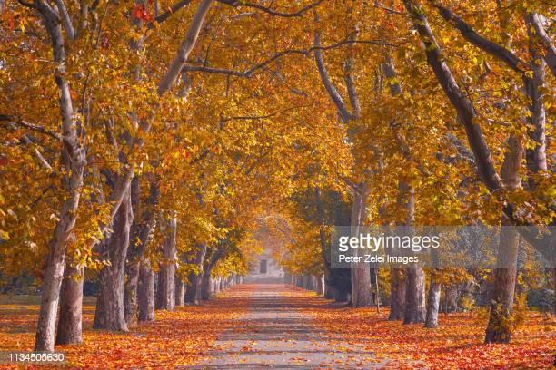 tree lined promenade to the church gate - アベニュー ストックフォトと画像