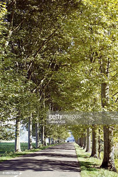a tree lined road in a rural france - vcg stock pictures, royalty-free photos & images