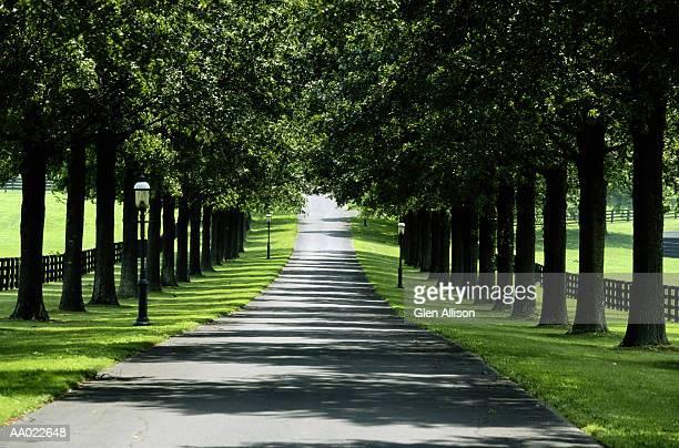 tree lined road, lexington, kentucky - lexington kentucky stock pictures, royalty-free photos & images