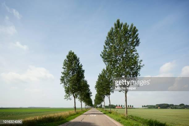 Tree lined road on dyke, Geersdijk, Zeeland, Netherlands