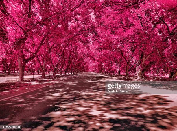 tree lined road - infrarosso foto e immagini stock