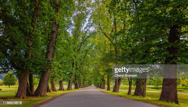 tree lined road - avenue stock pictures, royalty-free photos & images