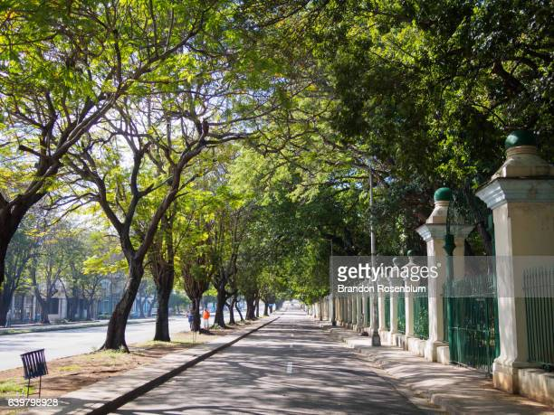 tree lined street in havana, cuba - boulevard stock pictures, royalty-free photos & images