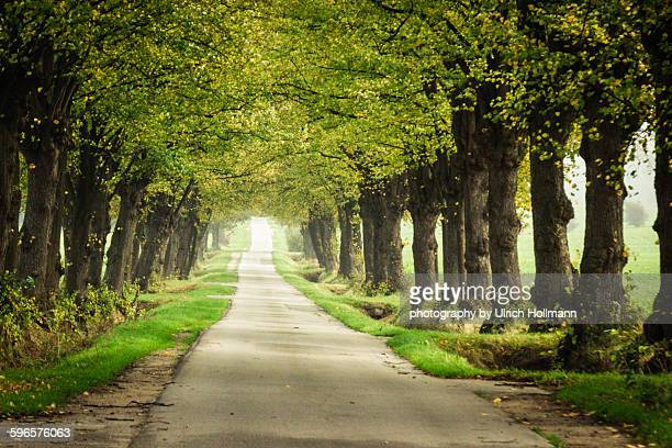 tree lined street in northern germany - avenue stock pictures, royalty-free photos & images