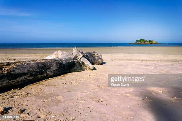 Tree log along Four Mile Beach