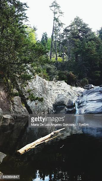tree log floating in lake - cordoba argentina stock photos and pictures