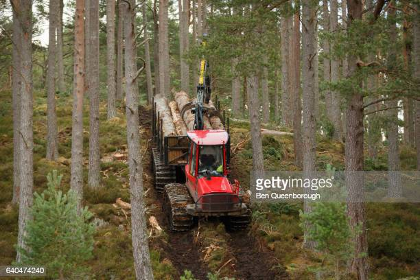 Tree logging in a forest