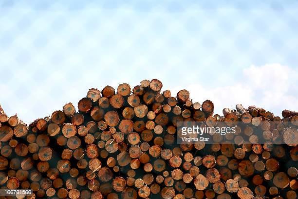 Tree logs in a timber yard