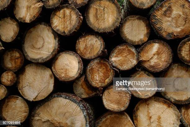 Tree logs in Bialowieza Forest, north-eastern Poland