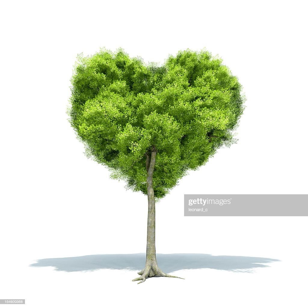 Tree Love : Stock Photo