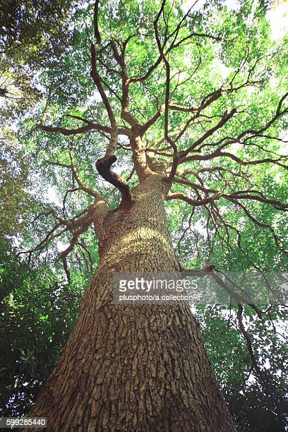 Tree, Low angle view, Kanagawa Prefecture, Honshu, Japan