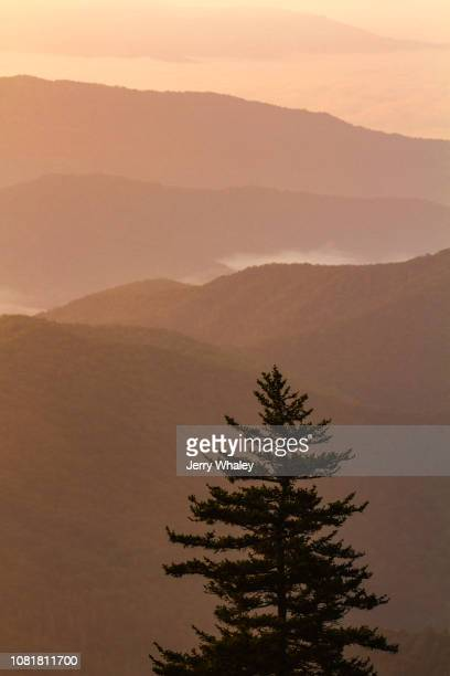 tree & mountains - clingman's dome - fotografias e filmes do acervo