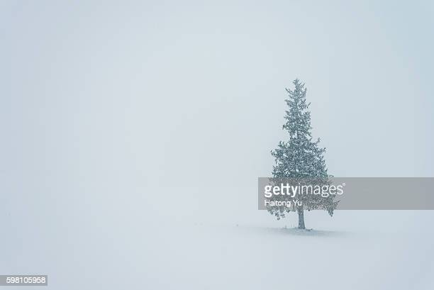 A tree named 'Christmas Tree' in Hokkaido, Japan