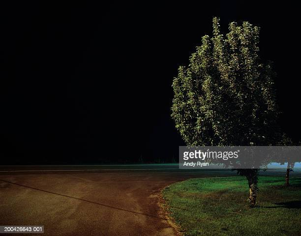 Tree near country road at night, close-up
