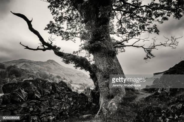 Tree near stone wall