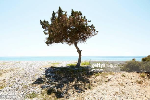 tree near the beach