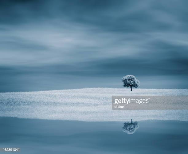 Tree near water