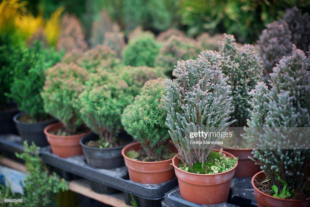 Tree nursery : Stock Photo