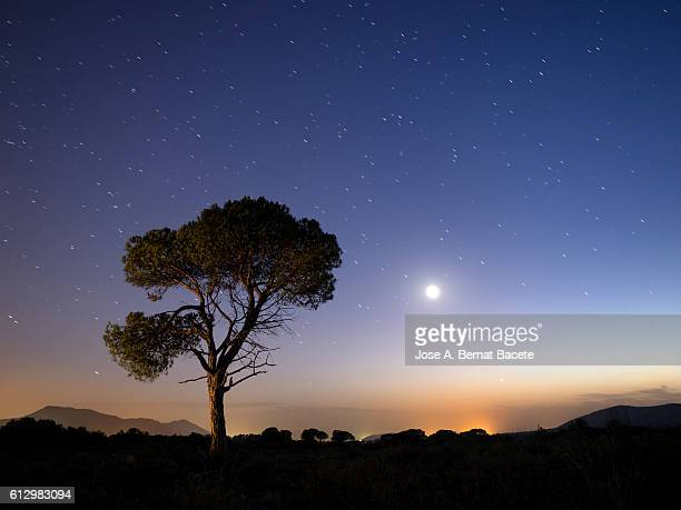 A tree of alone pine in the mountain, a night of blue sky of full moon and stars