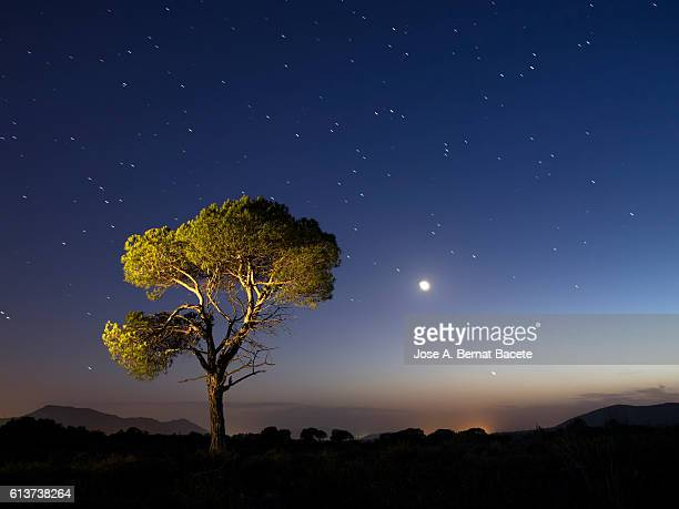 a tree of alone pine in the mountain, a night of blue sky of full moon and stars - north star stock pictures, royalty-free photos & images