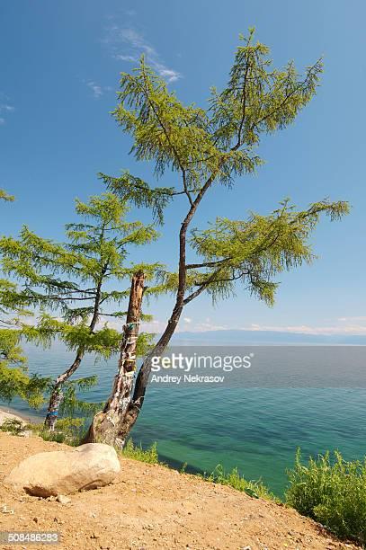 Tree of desires, settlement of Listvyanka, Lake Baikal, Irkutsk region, Siberia, Russian Federation, Eurasia