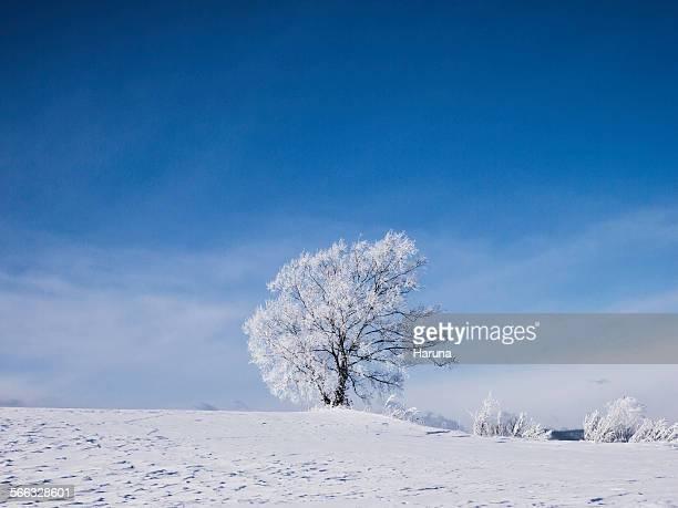 Tree of Haunted