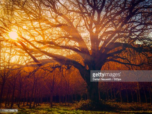 tree of life - elm tree stock pictures, royalty-free photos & images