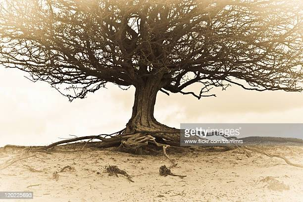 tree of life - durability stock photos and pictures