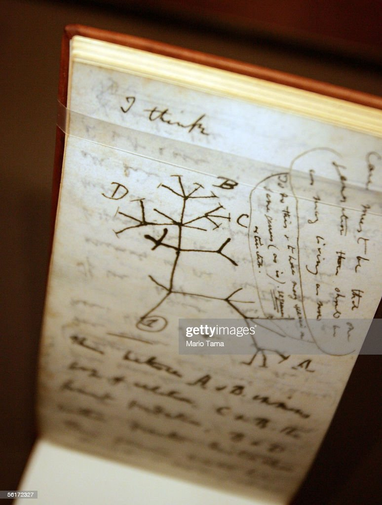 A 'Tree of Life' sketch is seen in Darwin's 'B' notebook at a press preview of the new 'Darwin' exhibition at the American Museum of Natural History November 15, 2005 in New York City. The exhibition traces the life and discoveries of Charles Darwin and will be on view from November 19, 2005 through May 29, 2006.