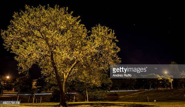 tree of night - andres ruffo stock pictures, royalty-free photos & images