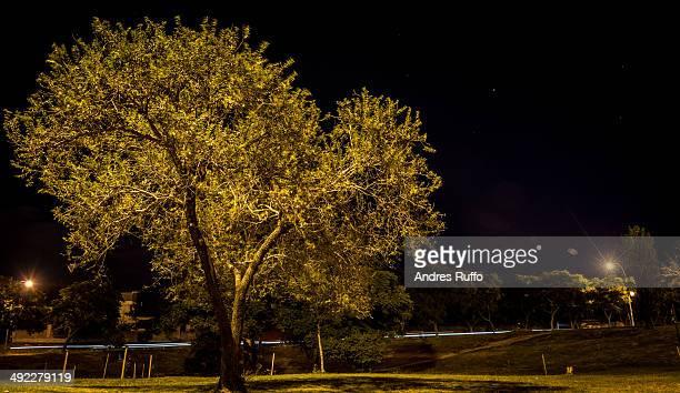 tree of night - andres ruffo stockfoto's en -beelden