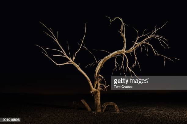 tree of the abyss - tom grubbe stock pictures, royalty-free photos & images