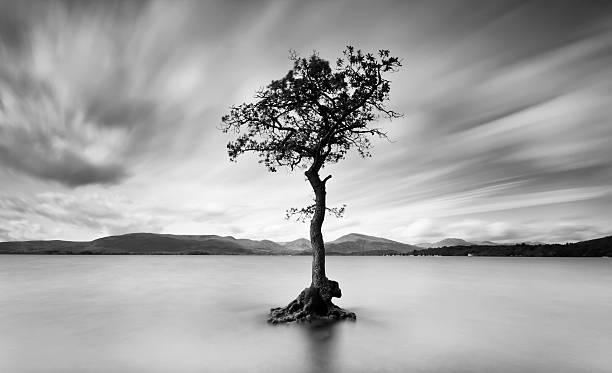 Tree of the Loch