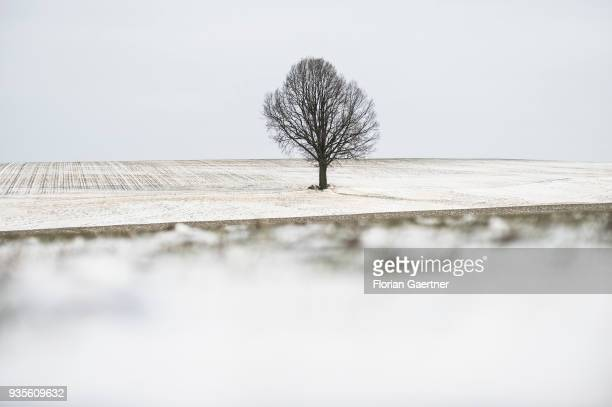 A tree on a field is pictured at winter on March 18 2018 in Holtendorf Germany