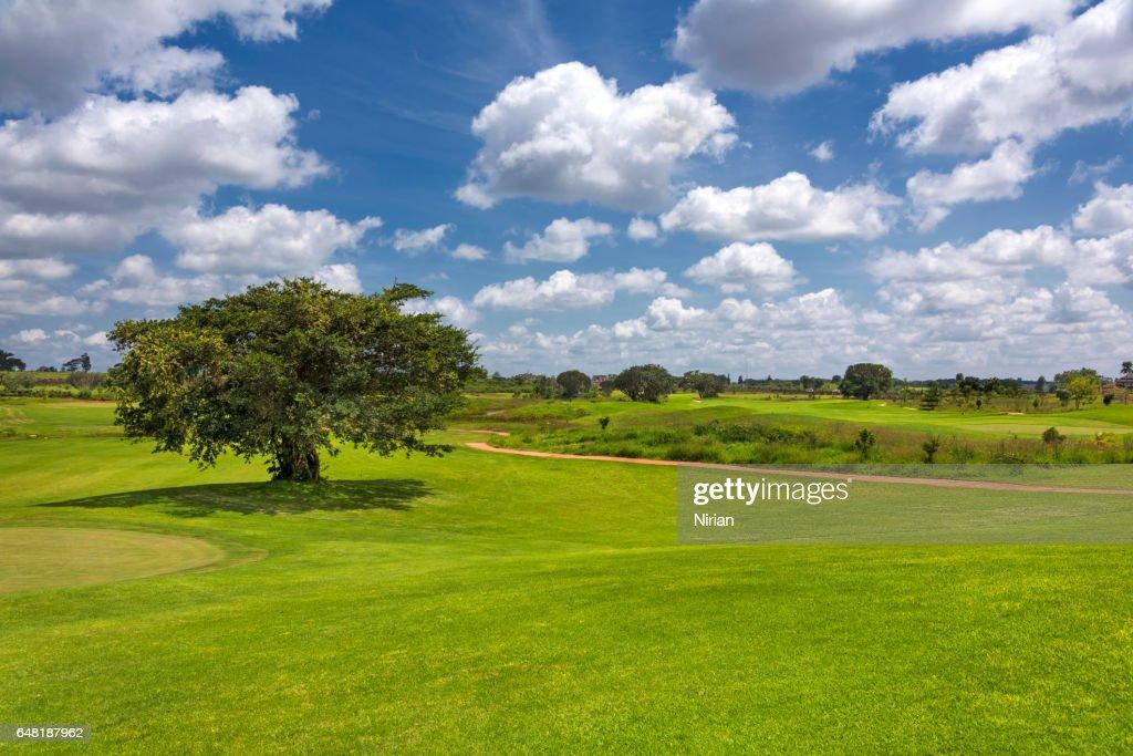 ゴルフ人口が減少している!?倒産に追い込まれるゴルフ場も!