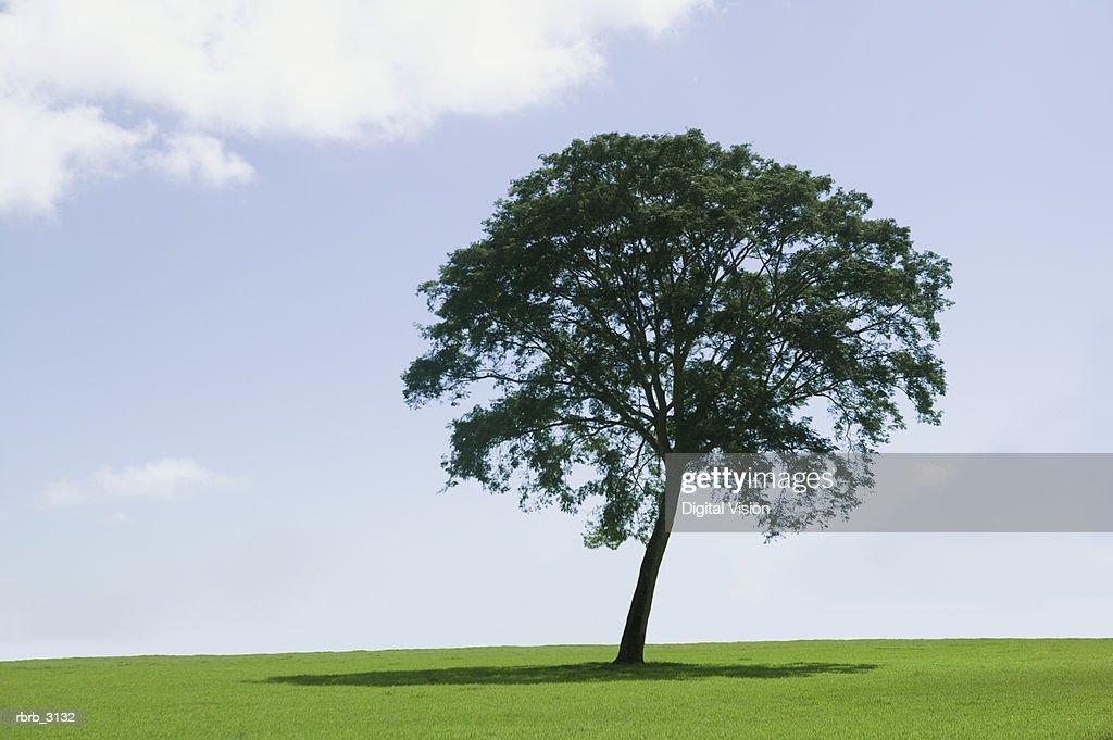 Tree on a grassy hill : Foto de stock