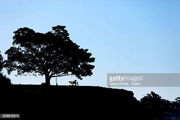 Tree on a hill at Elkington Park Balmain Sydney Australia Thursday 16th January 2014
