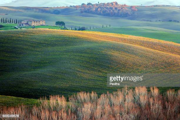 tree on a plowed field,autumn,poplar,tuscany,italy - pavliha stock photos and pictures