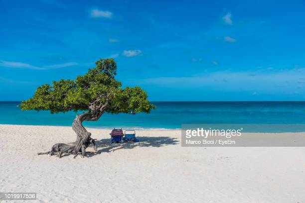 tree on beach against blue sky - oranjestad stockfoto's en -beelden