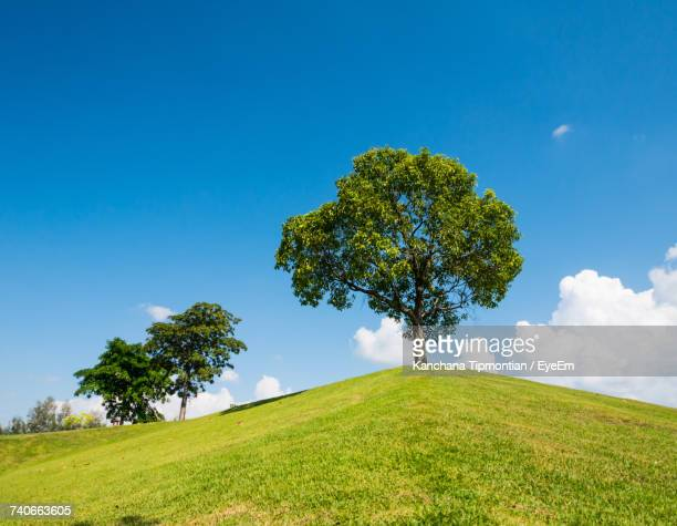 Tree On Countryside Landscape Against Blue Sky