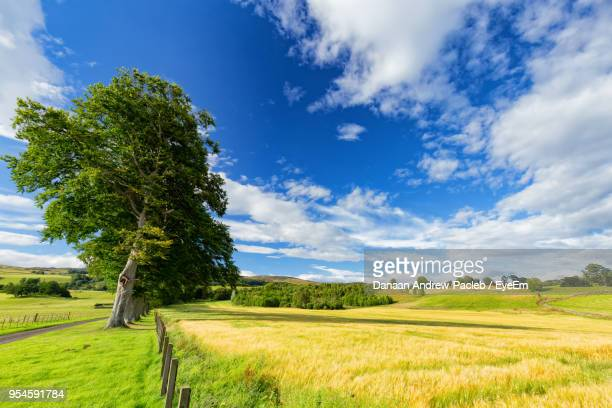 tree on field against blue sky - crieff stock pictures, royalty-free photos & images